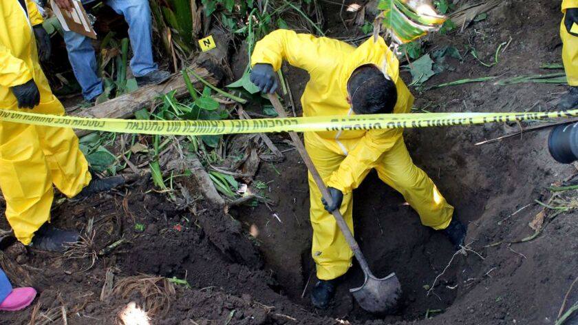A crime scene technician digs up a clandestine grave, one of three discovered in a sugarcane field in Mexico's Nayarit state that were found to hold 33 bodies, on Jan. 15.
