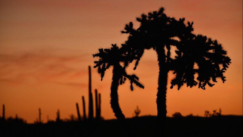 Cabeza Prieta National Wildlife Refuge, near Ajo, Ariz.