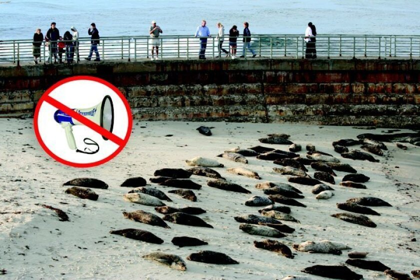 Seal pupping season has forced the community issue. file