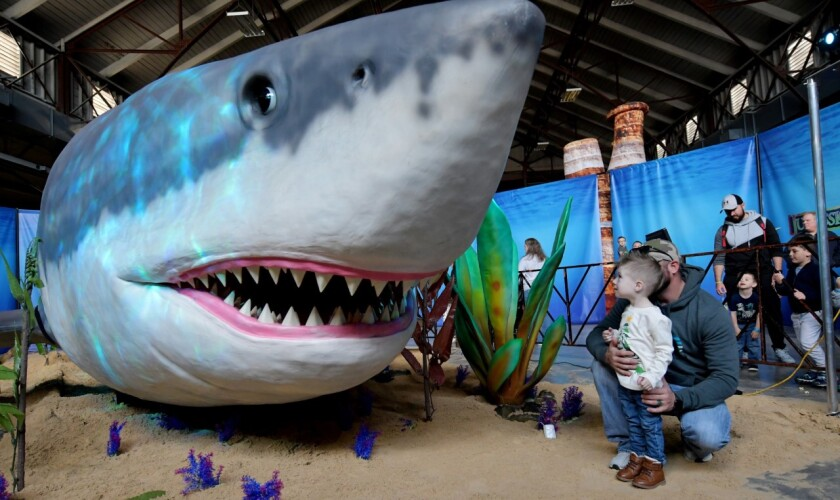 The 50-foot-long megalodon is among the creatures featured at the Jurassic Quest dinosaur show running Friday to Sunday at the Del Mar Fairgrounds. The exhibit includes more than 80 true to life-sized animatronic dinosaur replicas.