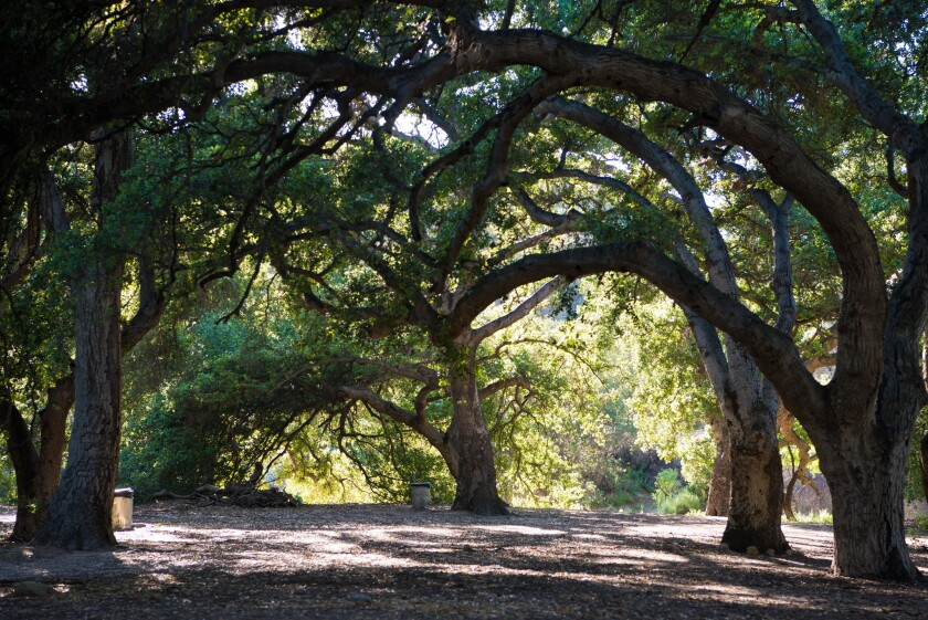 The oak grove at Corriganville Park in Simi Valley.