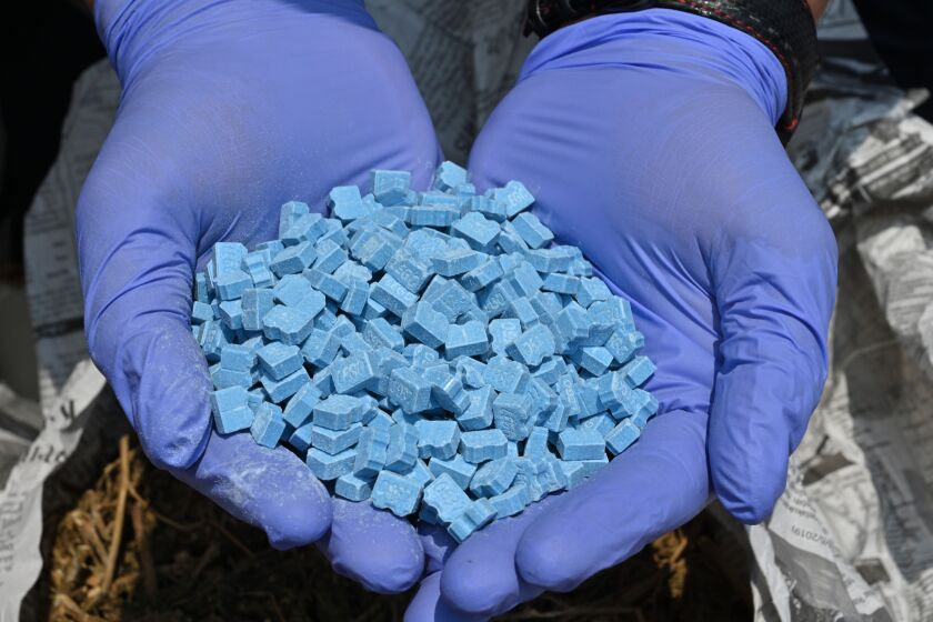 A gloved pair of hands holds a mound of blue pills