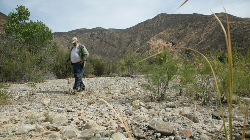 Sam Sweet, UC Santa Barbara ecologist and an expert on the arroyo toad, looks to see how the population in Agua Blanca creek in Piru Canyon Wash has survived the drought.