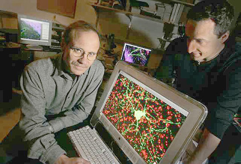 POINTS OF LIGHT: Neuroscientist Fred Gage, left, and cancer biologist Alysson Muotri of the Salk Institute for Biological Studies wondered what produces individuality. The computer screen shows photos of brain neurons, which evolve throughout life.