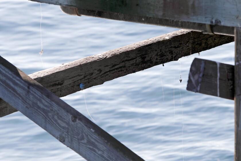 tn-dpt-me-fishing-line-recycling-20200103-2.jpg