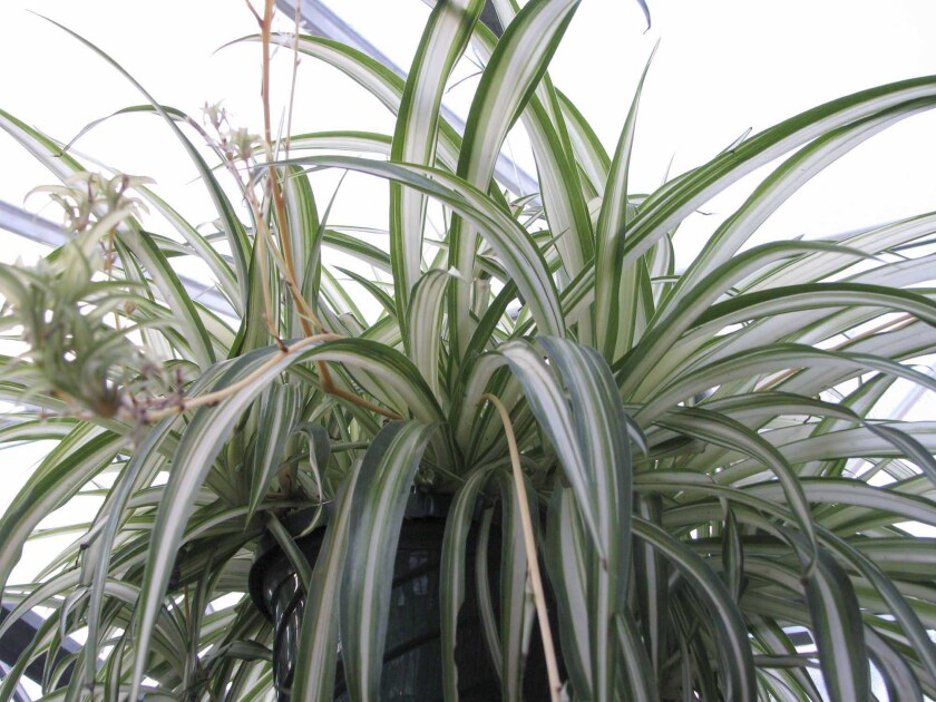 Gardening Houseplant Care