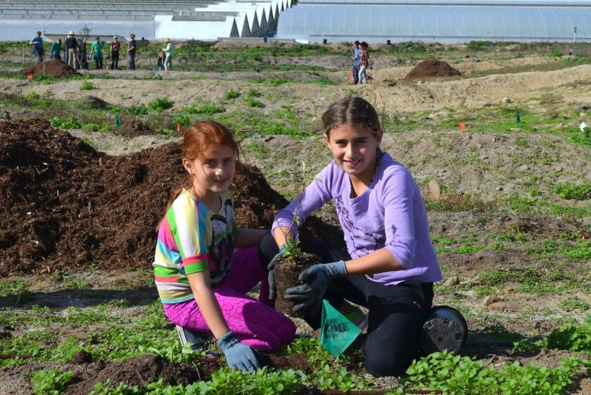"""Jolene and Talia Rabkin were among the 200 Coastal Roots Farm volunteers on Jan. 24 who planted trees for a """"food forest"""" at the Leichtag Foundation property."""
