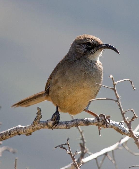 San Diego Birds