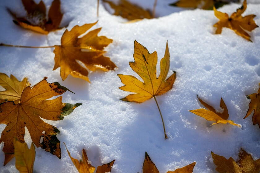 Fall leaves on the snowy ground near Mt. Baldy