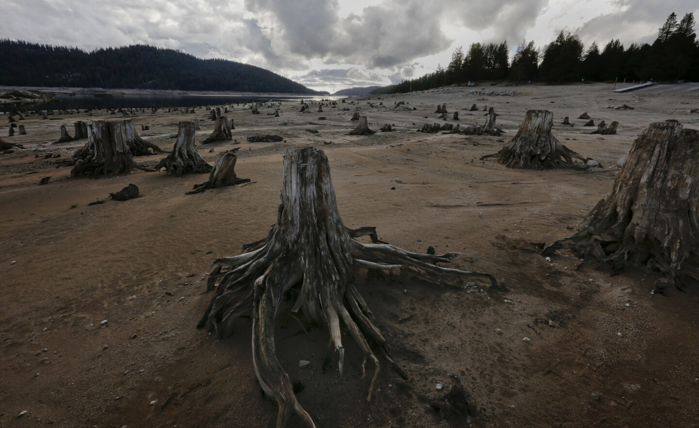As Huntington Lake recedes, tree stumps are left exposed. The reservoir is part of the San Joaquin River watershed.