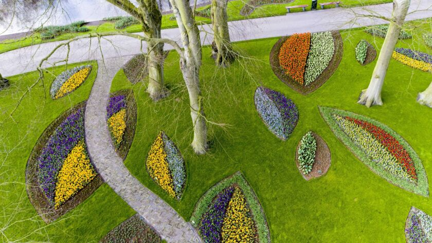 Flower bulbs are planted in patterns a year in advance of the spring bloom.
