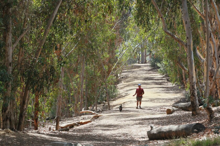 """Ryan Wheeler walks his dog named """"Pepper"""" on the main trail through Eucalyptus trees in the Carlsbad open space area known as Village H. Ryan lives nearby and often walks his dog here."""