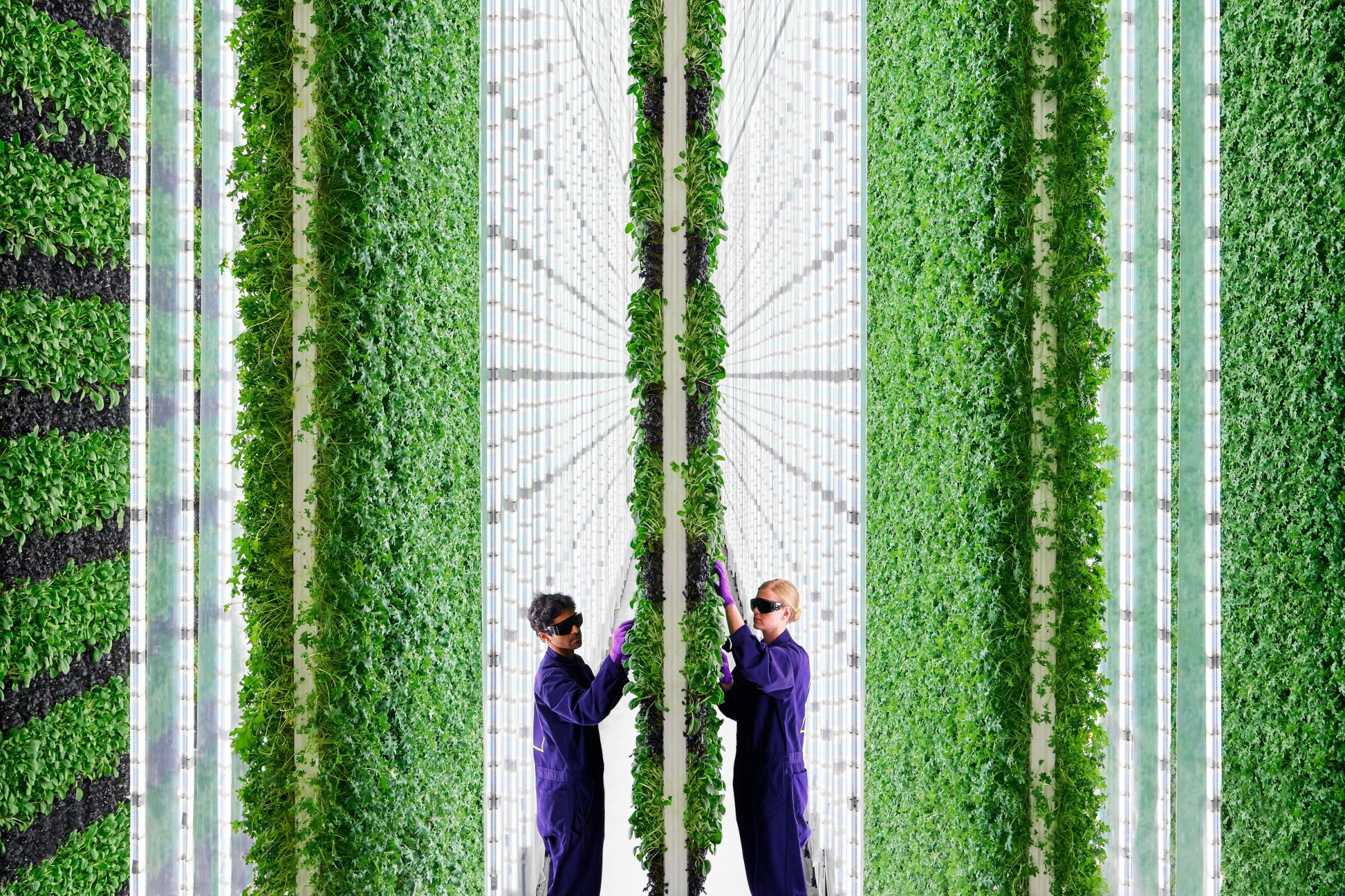 Plenty's South San Francisco hydroponics growing facility.