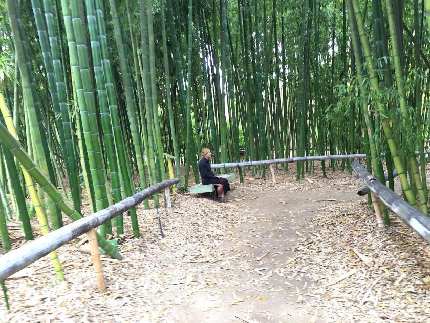 The pause that refreshes: a forest bather sits within the towering bamboo garden at San Diego Botanic Garden in Encinitas.