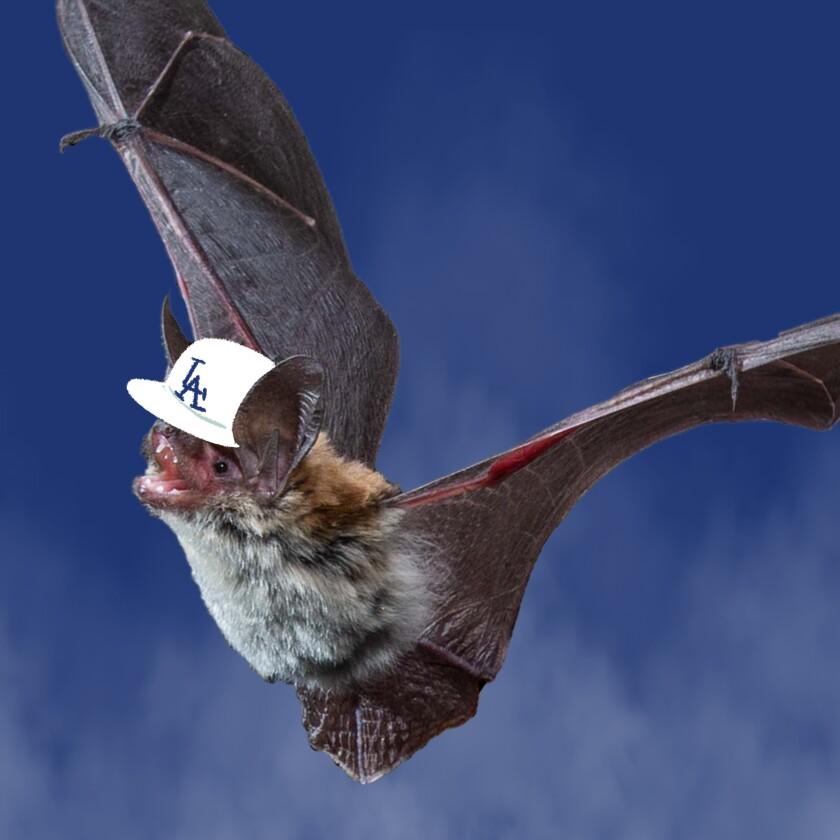 Bats in inner-city L.A.