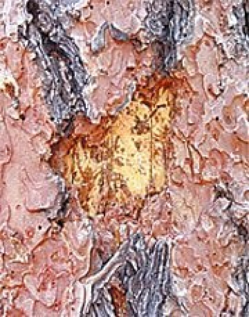 Beetle grubs feed on a pine tree's phloem, the layer of tissue through  which the tree transports water and nutrients. (USDA Forest Service)