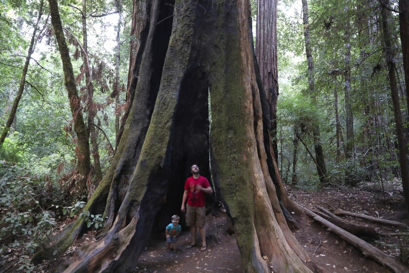 Andrew Walsh of Ben Lomond explores a hollow tree with son Philip, 2, along a trail in Big Basin Redwoods State Park in Boulder Creek in Santa Cruz County.