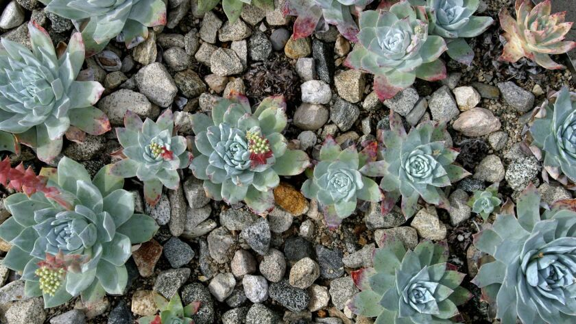Trio tried to smuggle $600,000 worth of California succulents, prosecutors say