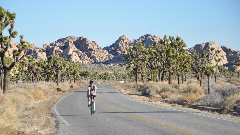 Cyclist rolls along Park Boulevard, the main artery of Joshua Tree National Park. At the corner of Park and Keys View road stands Cap Rock.