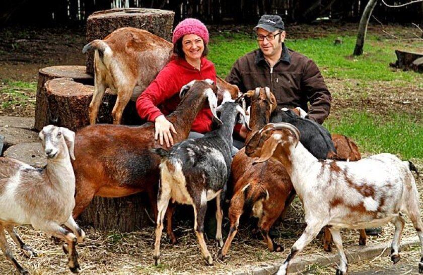 For Gloria Putnam and Steve Rudicel, goats, eggs and produce make a winning enterprise.