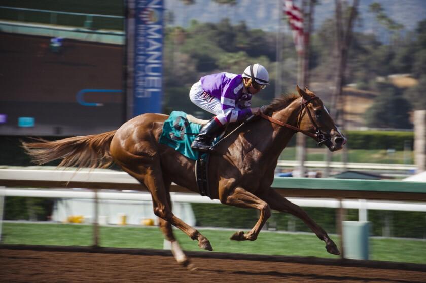 A jockey in a purple jersey on a sprinting racehorse at Santa Anita Park