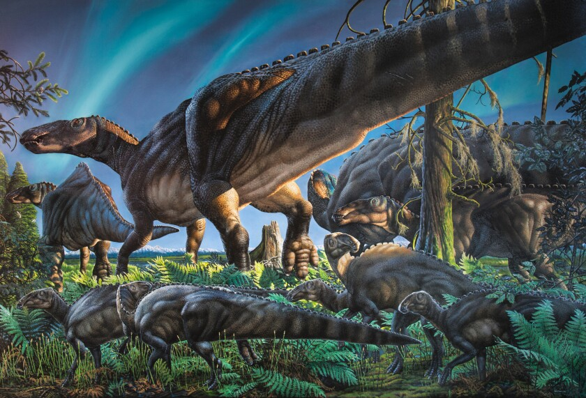 Shown is an artist's depiction of the dinosaur Ugrunaaluk kuukpikensis, which lived in the Arctic Circle about 70 million years ago.