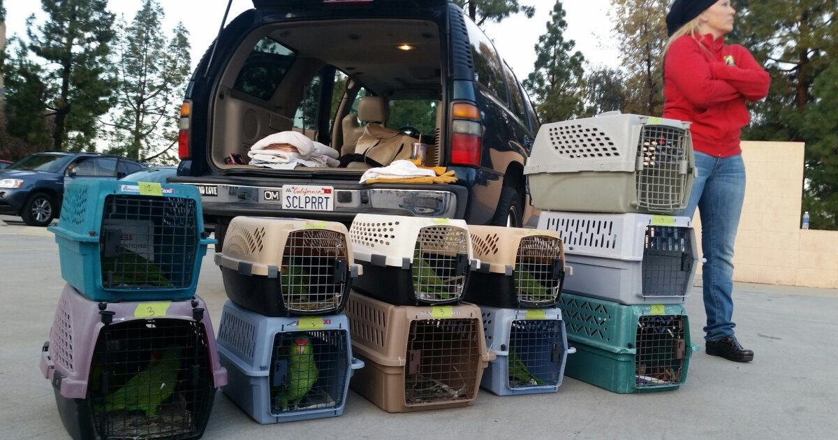 Healthy parrots released back into the wild - The San Diego Union