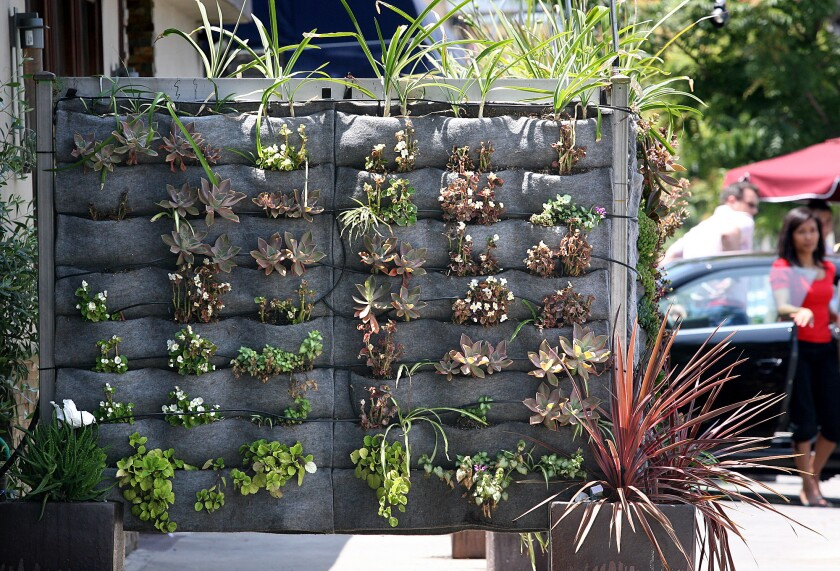A vertical garden in front of Raphael restaurant in Studio City features succulents in pocket panels designed by San Francisco-based Plants on Walls.