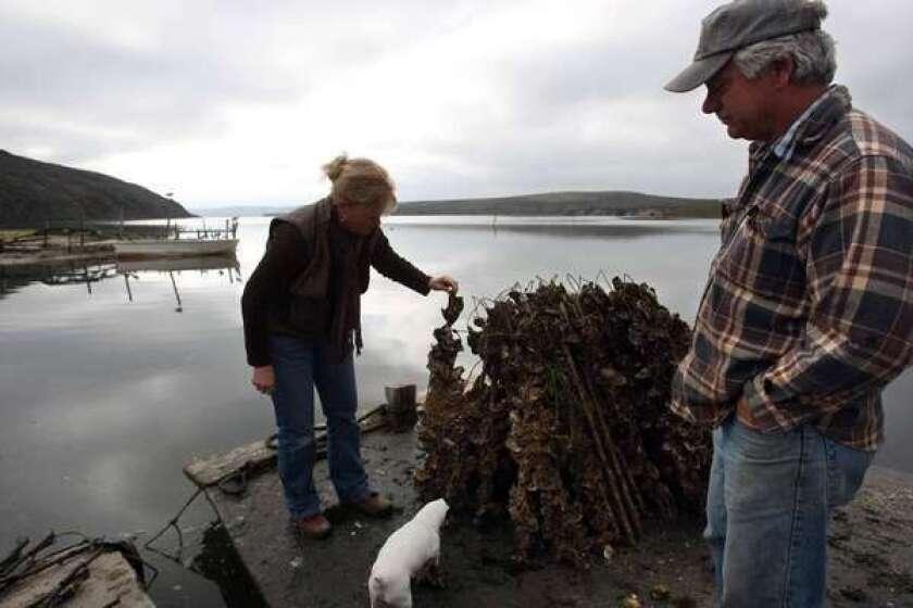 Fate of Bay Area oyster farm included in Senate budget bill
