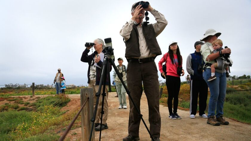 John Martin, center, a wildlife biologist at San Diego National Wildlife Refuge, guides bird watchers through a bird walk at the Tijuana Estuary in Imperial Beach in celebration of International Migratory Bird Day in this file photo taken in 2012.