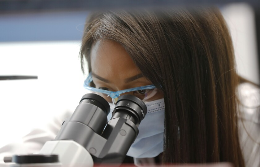 Associate scientist Dinah Amante looks at cells in a lab at Inovio Pharmaceuticals.