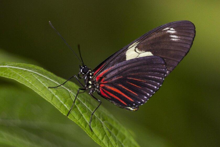 Safari Park's Butterfly Jungle