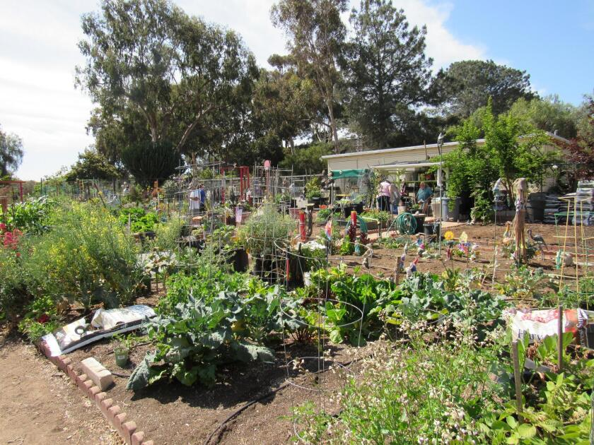 The OB Community Garden offers space to experiment with growing different plants.