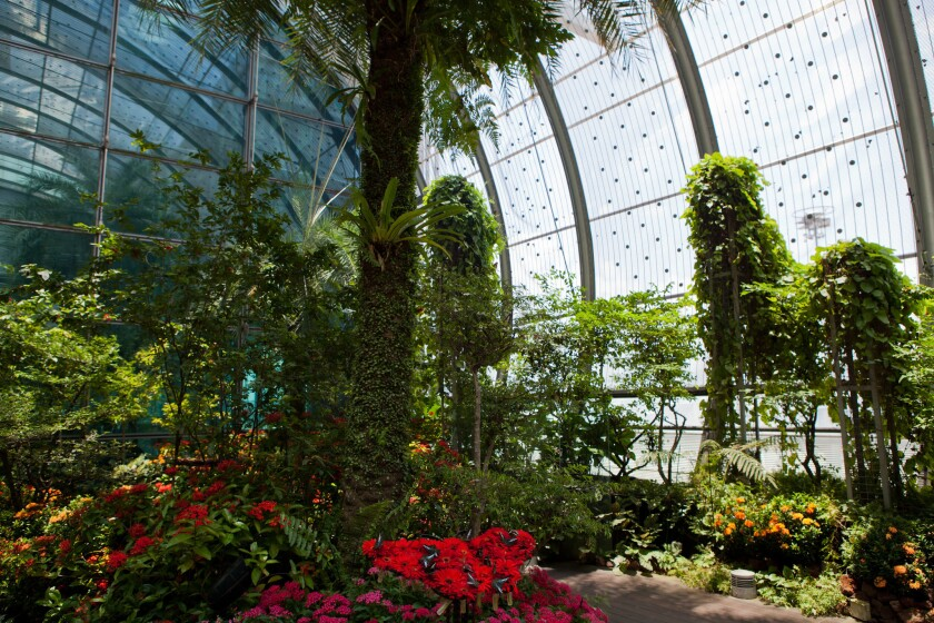 Singapore's Changi Airport Butterfly Garden is designed to