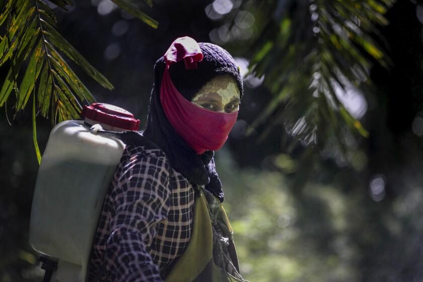 Una mujer carga sobre sus espaldas un contenedor con pesticida en una plantación de aceite de palma