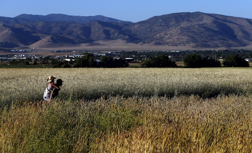 Jon Hammond and Kim Durham walk in a field of Sonora wheat at Weiser Family Farms in Tehachapi. Hammond is co-founder of the Tehachapi Grain Project.