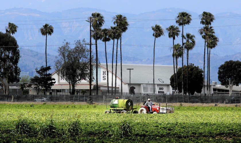 A worker drives a tractor in a strawberry field across the street from the gym at Rio Mesa High School in Oxnard, in background. The school is surrounded by strawberry fields.