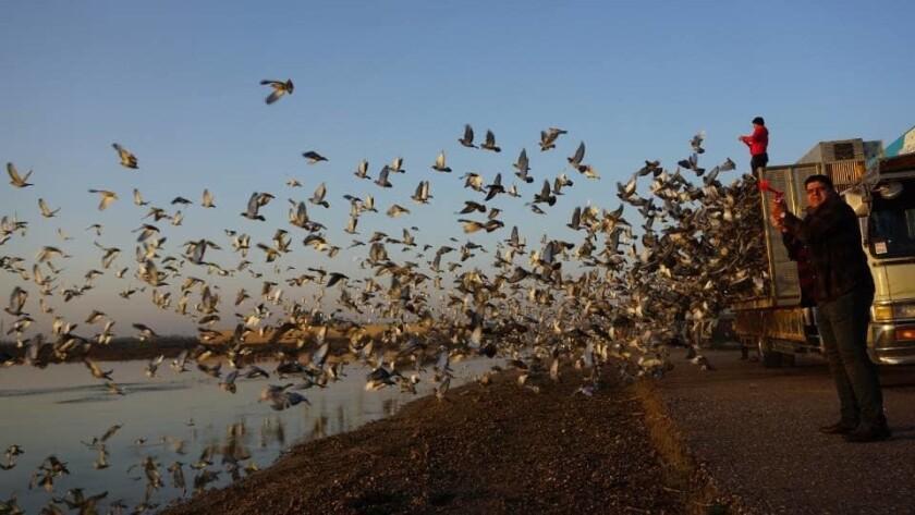 ct-iraq-pigeon-racing-sport-20190226-004