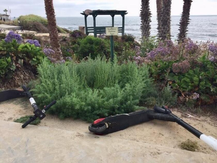Electronic scooters are commonly scattered on top of vegetation and other public spaces in La Jolla.