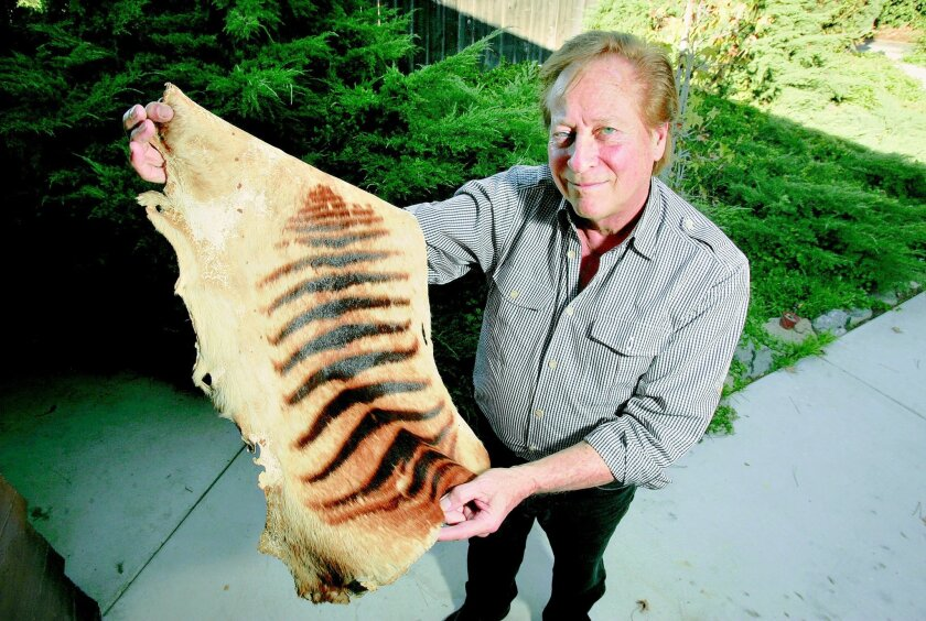 Bill Warren of Fallbrook says he bought what might be the pelt of an extinct Tasmanian tiger at a garage sale a few months ago for $5. An auction house is in negotiations to secure the skin so it can be sold.