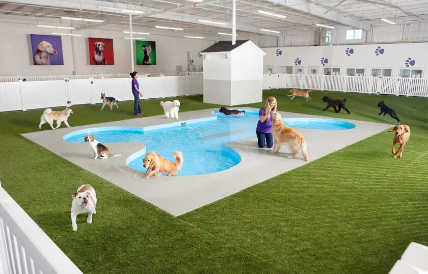 This undated artist rendering provided by Classic Communications courtesy of ARK Development depicts Paradise 4 Paws, a holding area for dogs in a new luxury terminal at New York's John F. Kennedy International Airport.  The privately owned ARK, as it's called, will handle the more than 70,000 anim