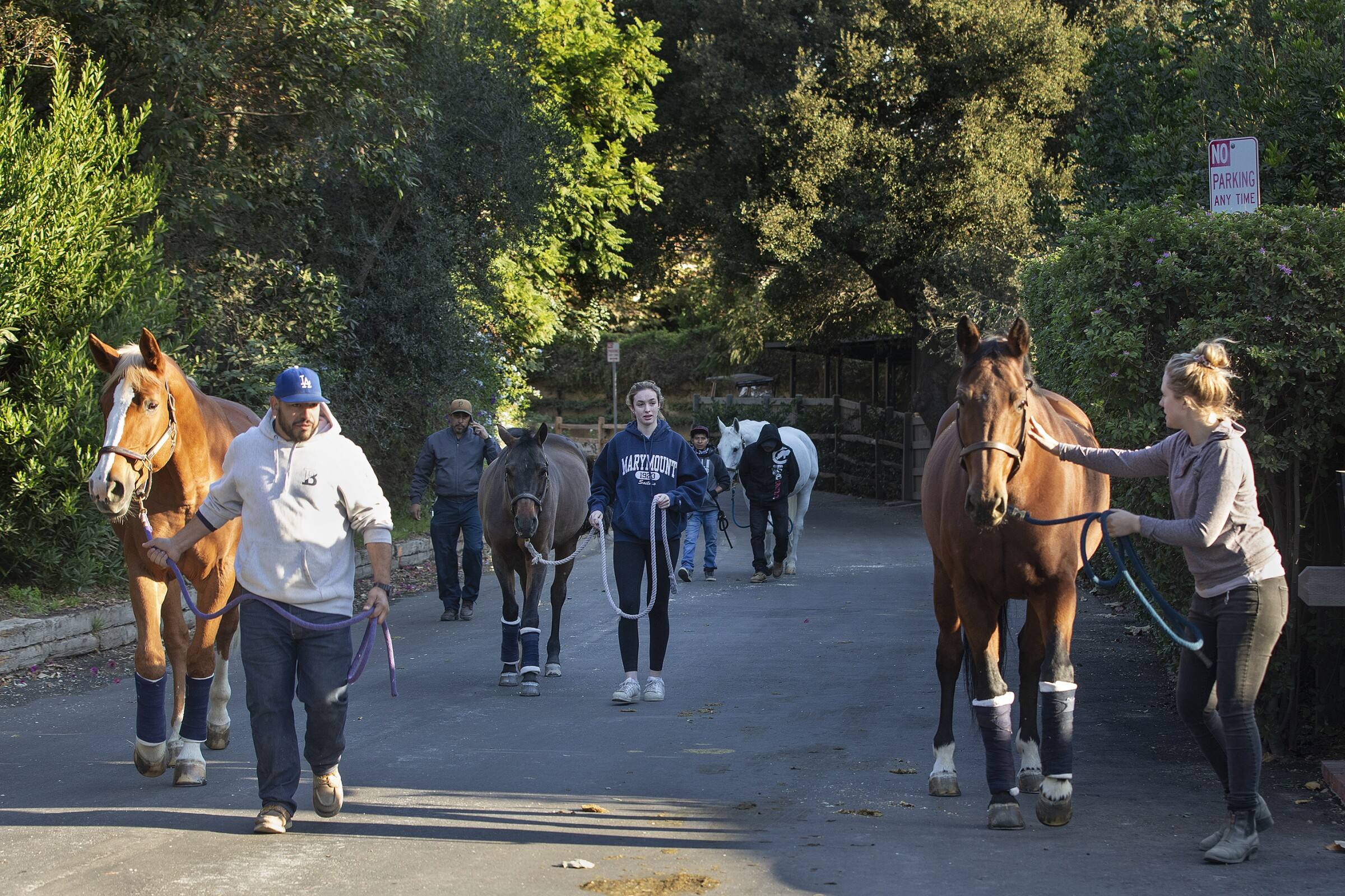 Evacuating horses