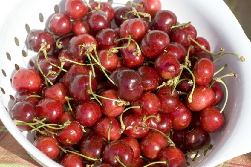 A closer look at Sequoia, a new brand of three cherry varieties.