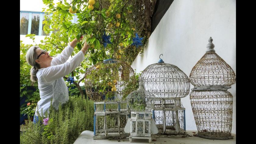 Open Days tour: Laura Morton's garden