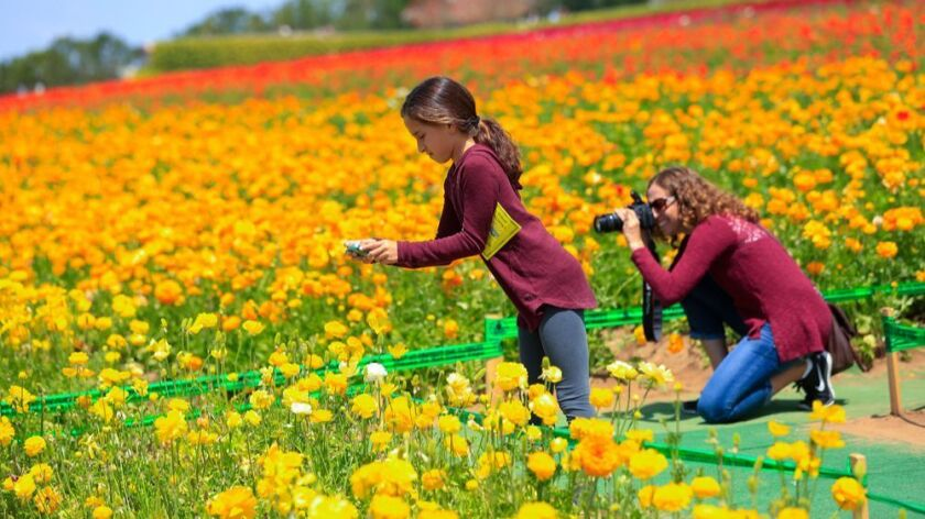 Natalia Garza (age10) along with her mom Adriana Garza from Rancho Bernardo take photos at the The Flower Fields in Carlsbad. The flower fields cover about 50 acres with giant Tecolote Ranunculus f