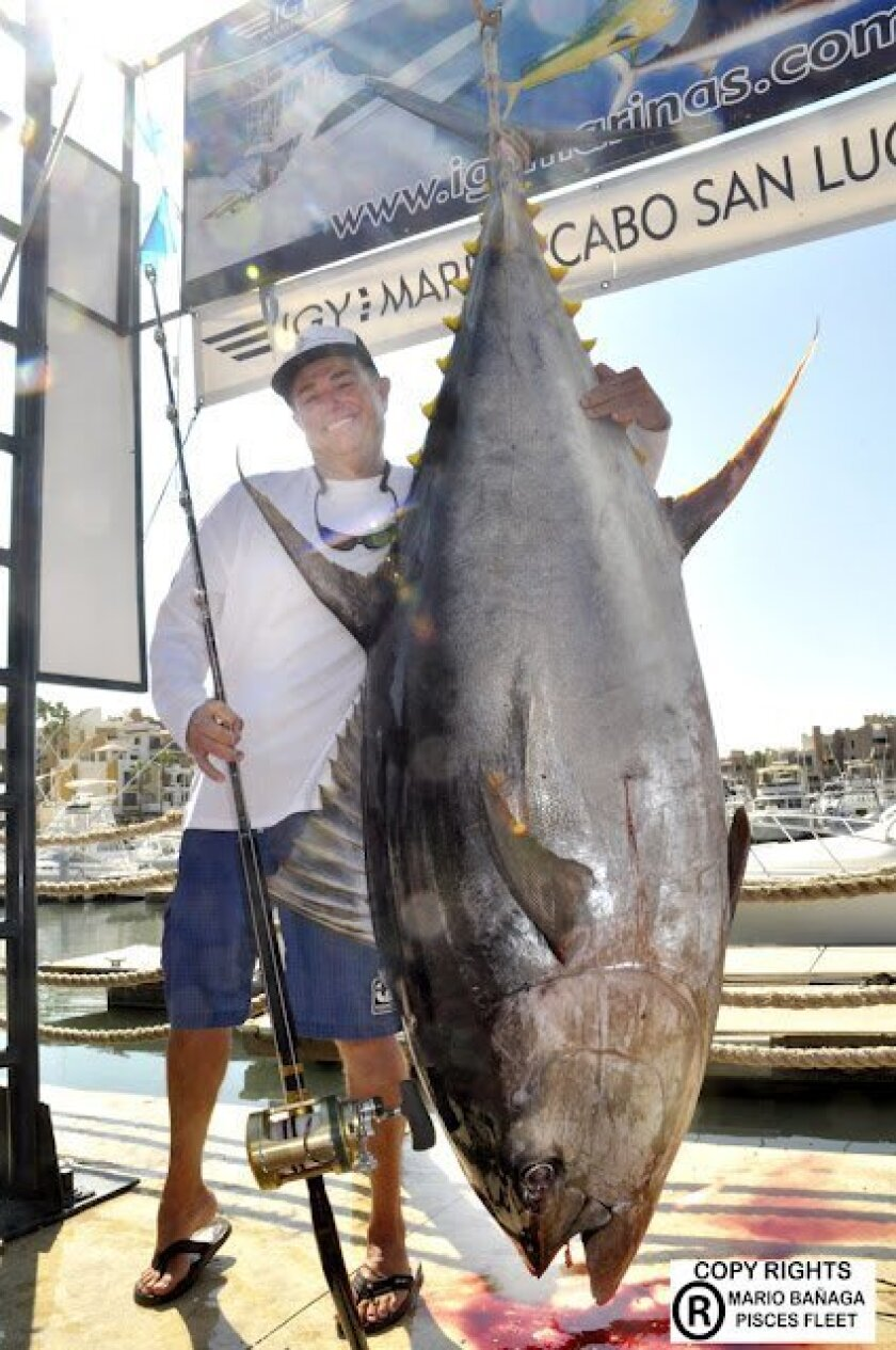 Dana Point's Guy Yokom had his scale calibrated and certified and the official weight of his potential world-record yellowfin tuna is 427 pounds.