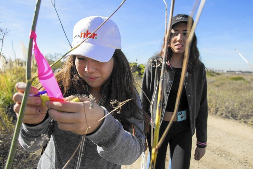 Costa Mesa High students Elisandra Alcala, 17, left, and Vanessa Montoto, 17, identify a plant species at the Newport Banning Land Trust on Tuesday.