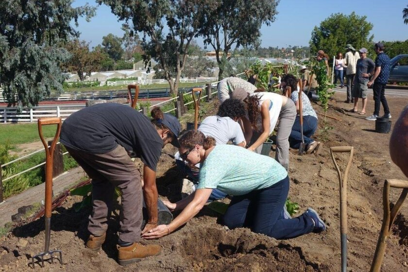 Leichtag Foundation and North County Hub staff join Coastal Roots Farm in the ceremonial planting of the Shmita Release Garden in Encinitas on Sept. 18, 2015.
