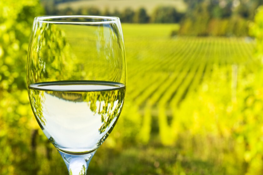White wine in glass, with vineyard in background.