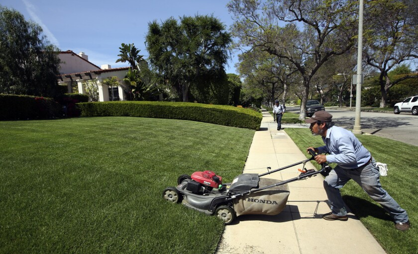The drought has some writers questioning the viability of the grass lawn in American culture. Seen here: A gardener mows a well-watered, emerald expanse in Beverly Hills in April.